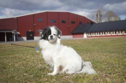 Patrik Ekelund har drivit Tånga Hed i 10 år. Han satsar medvetet på att platsen ska vara ett centrum för hundintresserade.