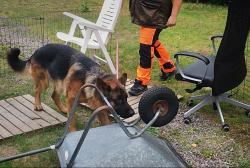 De som är aktiva i Nose Work kommer kunna göra prov hos Svenska Hundklubben efter nyår.