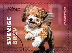 Sex hundar fick äran att pryda PostNords fem nya frimärken.