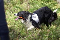 <span>Hans Vestergren vann SM i rapport förra året och detta år har ekipaget kvalat in högst av alla rapporthundar. Här kopplar han av Abbot, \